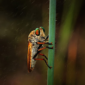 by Hindra Komara - Animals Insects & Spiders ( pwcinsectsandspiders, animals, macro photography, insects,  )
