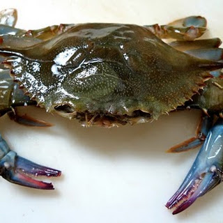 Fresh Soft Shell Crabs
