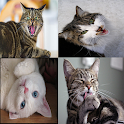 Cats Sound Effects Free icon