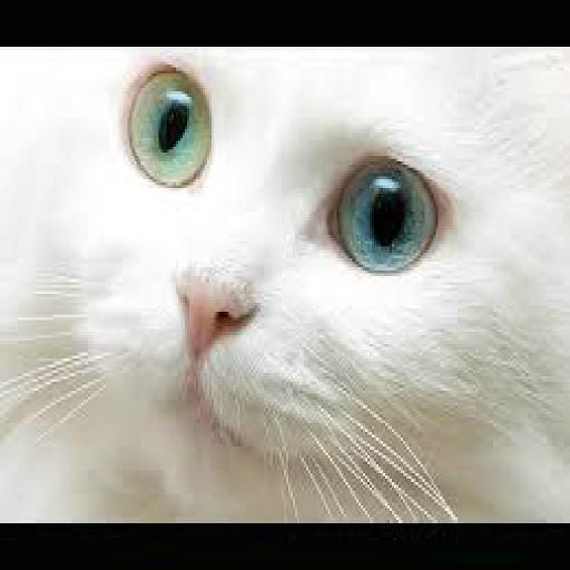 แมวน่ารักวอลล์เปเปอร์|玩個人化App免費|玩APPs