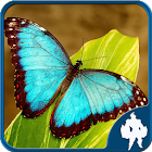 Butterfly Jigsaw Puzzles icon