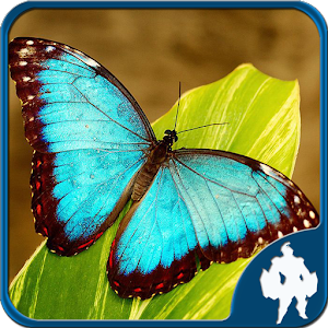Butterfly Jigsaw Puzzles for PC and MAC