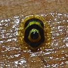 Target Beetle