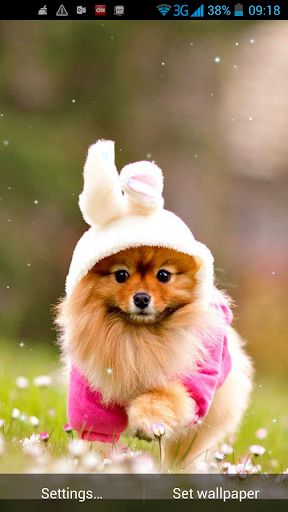 귀여운 강아지라이브 배경 화면