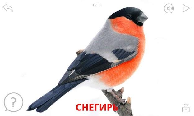 снегири птицы картинки с названиями удача всегда