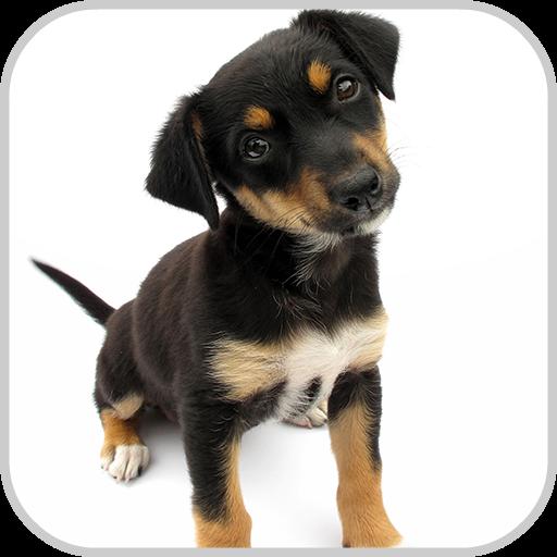 Dog Potty Training 書籍 App LOGO-硬是要APP