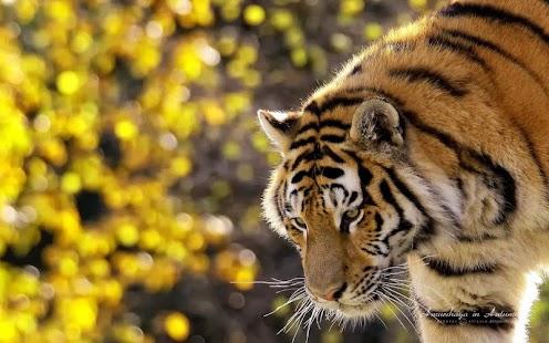 Moody Tiger 攝影 App-癮科技App
