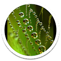 Crystal Beads Live Wallpaper icon