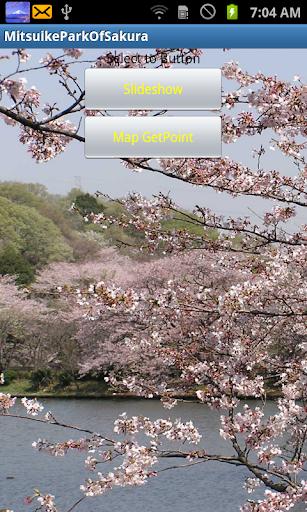 神奈川県:三ツ池公園の桜 JP022