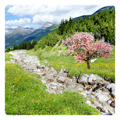 Mountain Stream Live Wallpaper