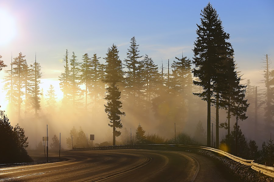 Winter curves by Capt Jack - Transportation Roads ( fog, path, trees, forest, sunrise, curves )