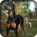 Doberman Wallpapers icon