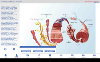 Screenshot of Anatomy & Physiology
