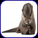 Otter Wallpaper icon