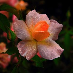 flower pixoto 11.jpg