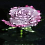 Purple Rose Sparkle LWP