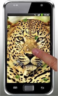 玩免費個人化APP|下載Leopard Best HD live wallpaper app不用錢|硬是要APP