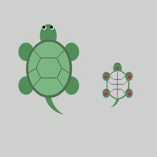 Funny turtle