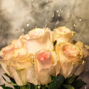 Let the Love Flow by RaeLynn Petrovich - Flowers Flower Arangements ( pink roses, pink flowers, floral photography, flower arrangements, roses, flowers, waterdrops, floral )