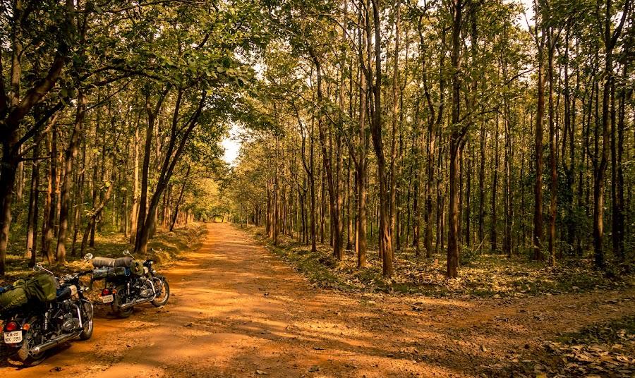 Which way??? by Madhujith Venkatakrishna - Landscapes Travel (  )