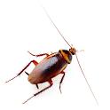 Bugs Live Wallpaper logo