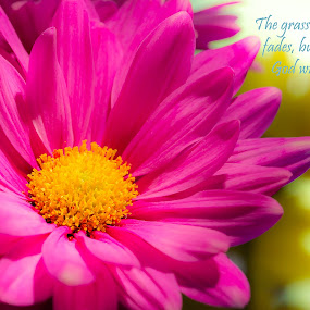 by Sandra Clukey - Typography Captioned Photos ( quotes, scriptures, cleveland tn, photographer, flowers, sandra clukey, photography )