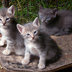 My Cat's babies by LoRe Pics ARG - Animals - Cats Kittens ( gato, cat, nature, kittens, garden,  )