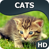 Cats wallpapers HQ