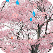 Sakura Tree Live Wallpaper