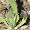 uncertain butterfly