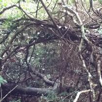 Trees of Hawaii
