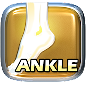 PT and OT Helper: Ankle