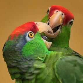 by Agoes Santoso - Animals Birds
