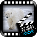 Best Arctic Animals Sounds icon