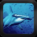 Shark Species: Types of Shark
