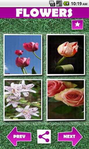 Wallpapers: Flowers in Bloom