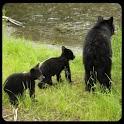 Alaska Critters icon