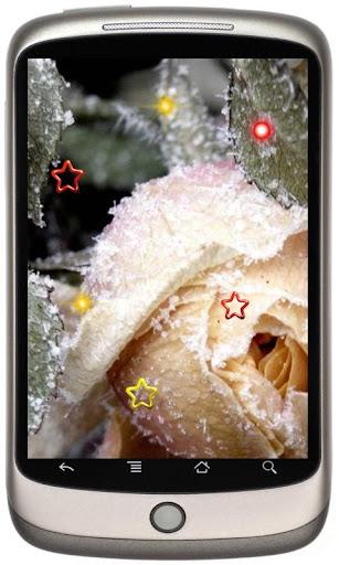 Roses n Winter Ice LWP