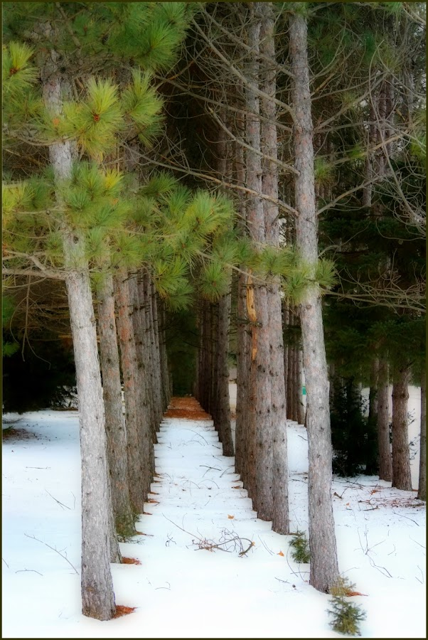 by Lori Rose - Nature Up Close Trees & Bushes (  )