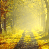 Autumn Morning Live Wallpaper
