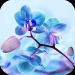 Orchid Live Wallpaper