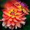IMG_1463-15.jpg