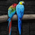 Parrots HD Live Wallpapers icon