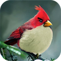 Angry Birds Guide icon