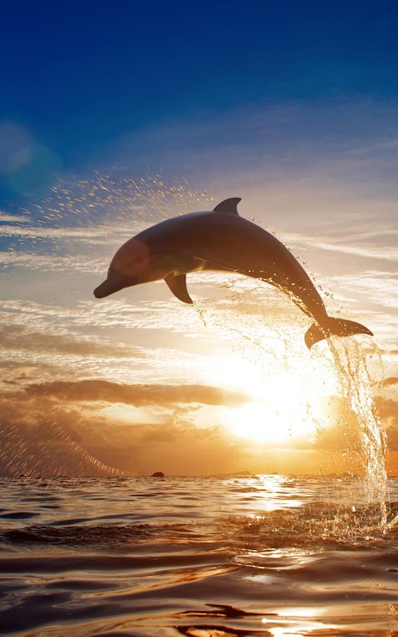 Dolphins Live Wallpaper Android Apps on Google Play