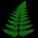 Barnsley Fern logo