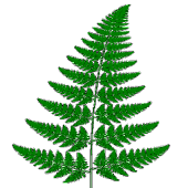 Barnsley Fern Demo