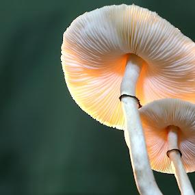by Wahyudi Barasila - Nature Up Close Mushrooms & Fungi