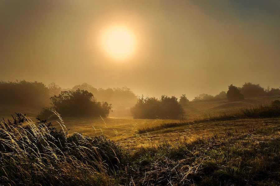 Morning fog by Geanina Boureanu - Landscapes Sunsets & Sunrises