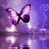 Purple Butterfly Reflected In